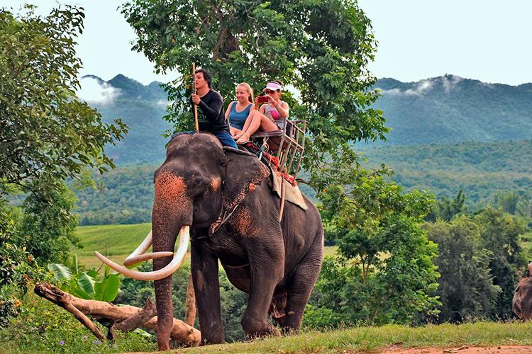 Катание на слонах на Квае