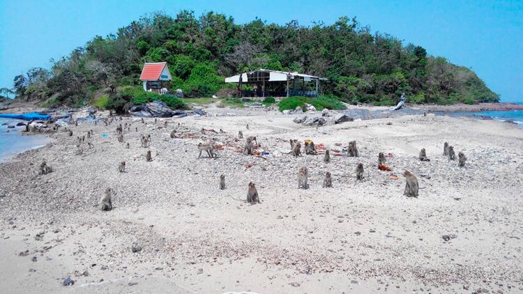 Остров обезьян на экскурсии Мадагаскар