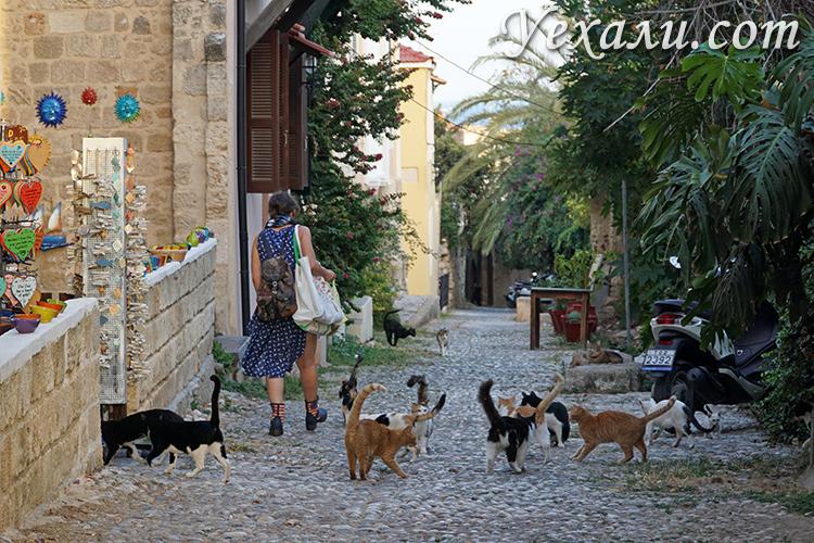 Лучшие фото города Родос. Греческие коты.