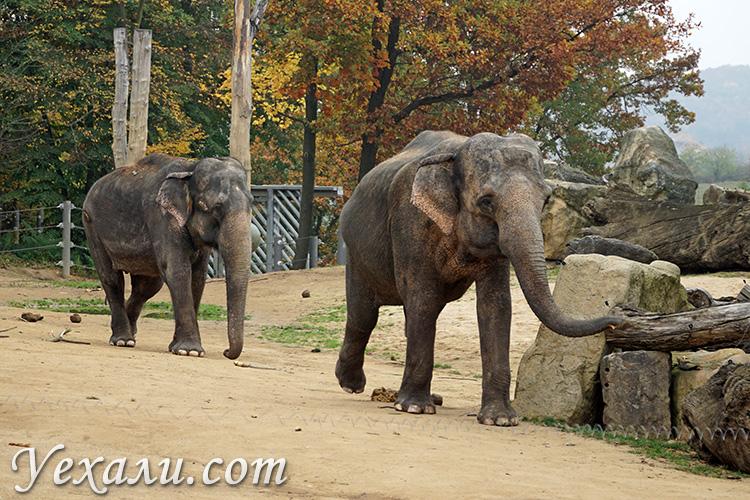 Куда сходить и что посмотреть в Праге за 7 дней. На фото: Пражский зоопарк.