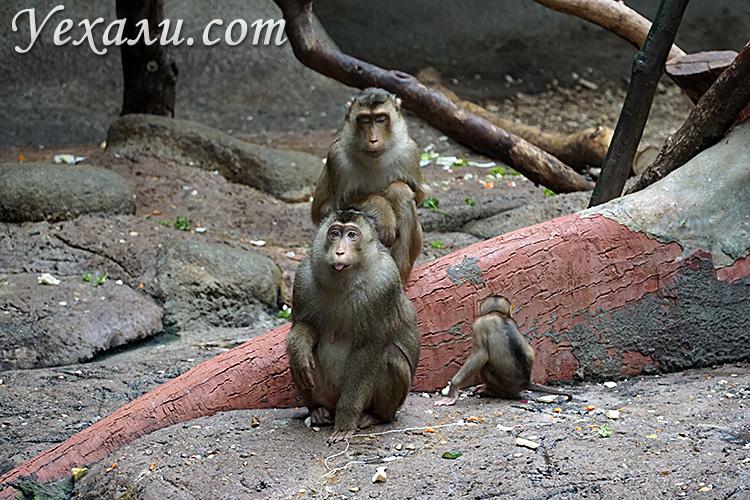 Зоопарк в Праге, Чехия. На фото: обезьяны.