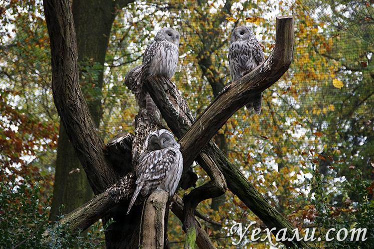 Пражский зоопарк. На фото: совы.