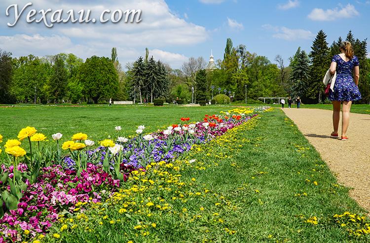 Самые красивые фото Будапешта, Венгрия: парк на острове Маргит.