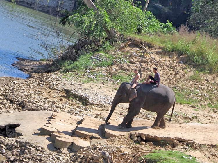 Отзыв о купании со слонами