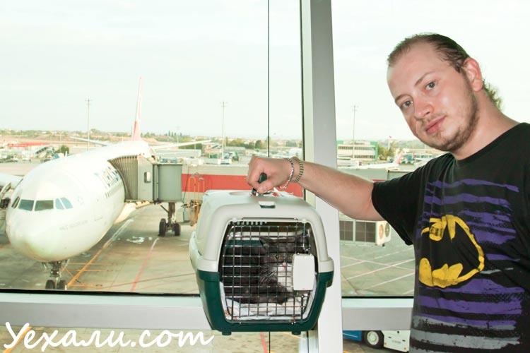 кошка в аэропорту, перелет с кошкой