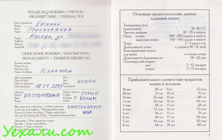 Ветеринарный паспорт. Перелет с кошкой