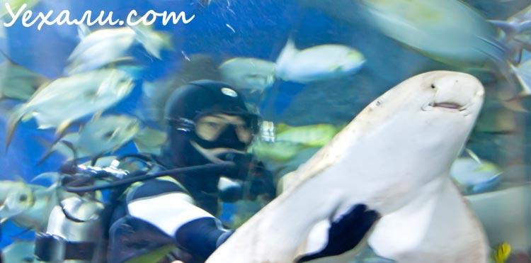 Pattaya Underwater World Shark Feeding