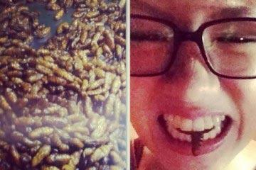 Beetles Thailand