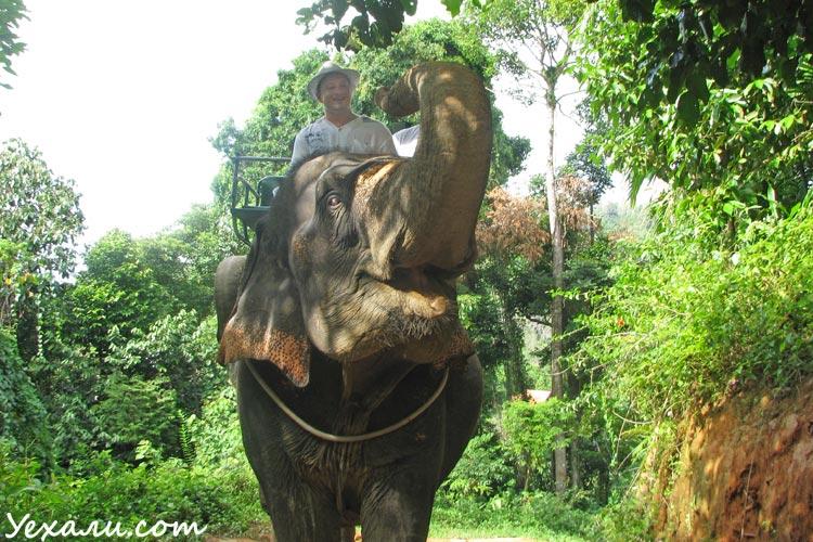 Отдых в Паттайе: катание на слонах