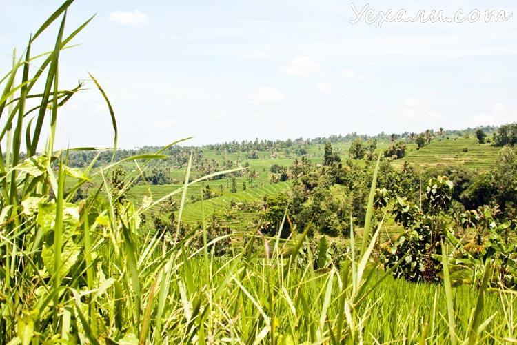 Рейтинг достопримечательностей острова Бали: рисовые террасы Джати Лувих