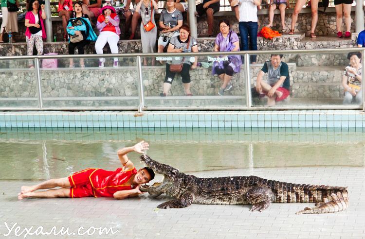 Шоу с крокодилами в Паттайе