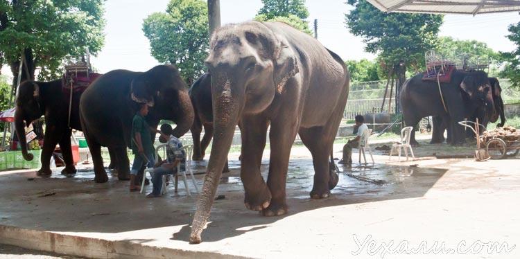 Парк миллионолетних камней в Паттайе: слоны
