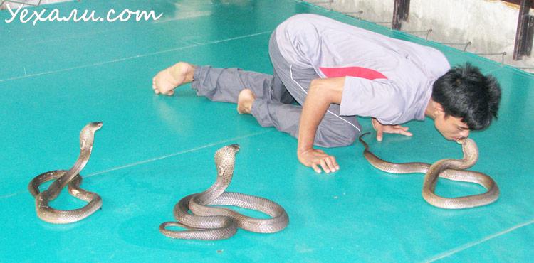 что делать если встретил змею в Тайланде