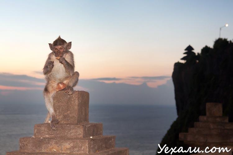Храм Улувату на Бали фото