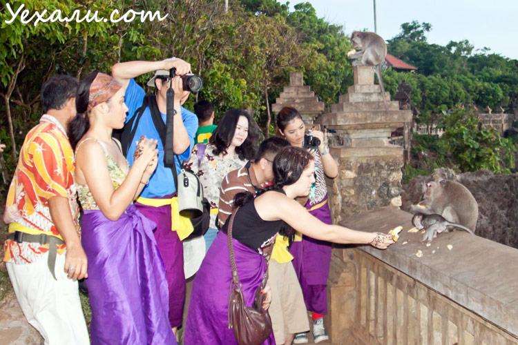 Обезьяны у храма Улувату