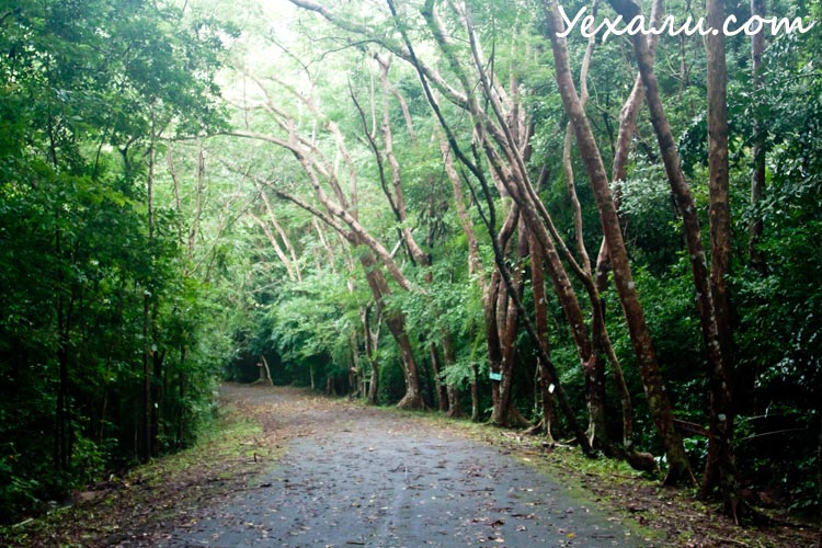 Джунгли Таиланда