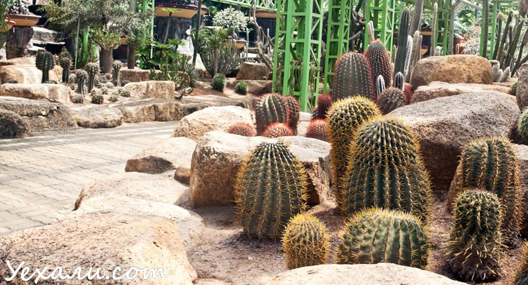 Тропический парк Нонг Нуч в Паттайе