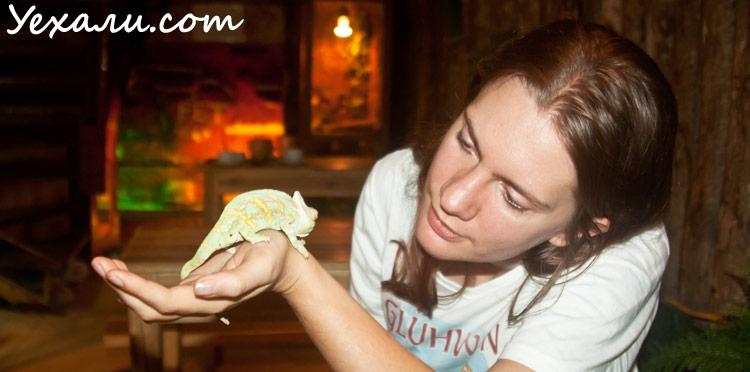 Кафе с ящерицами в Ханое