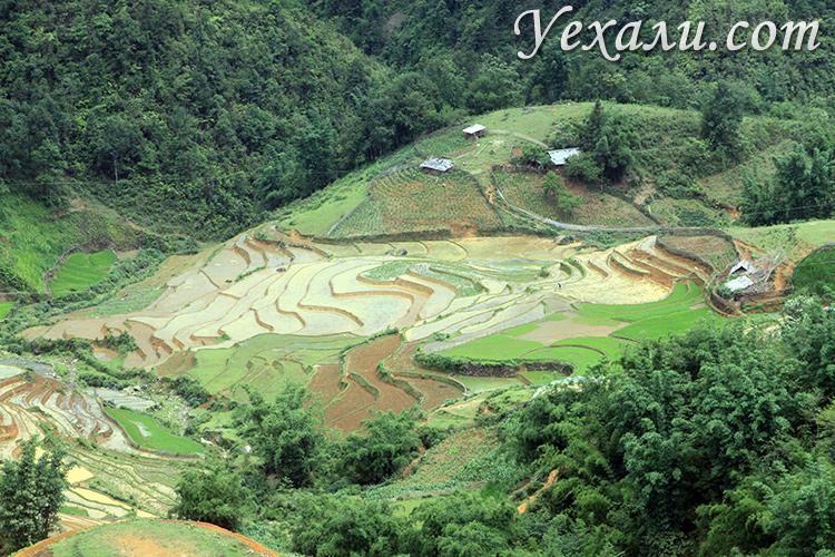 Рисовые террасы в Сапе