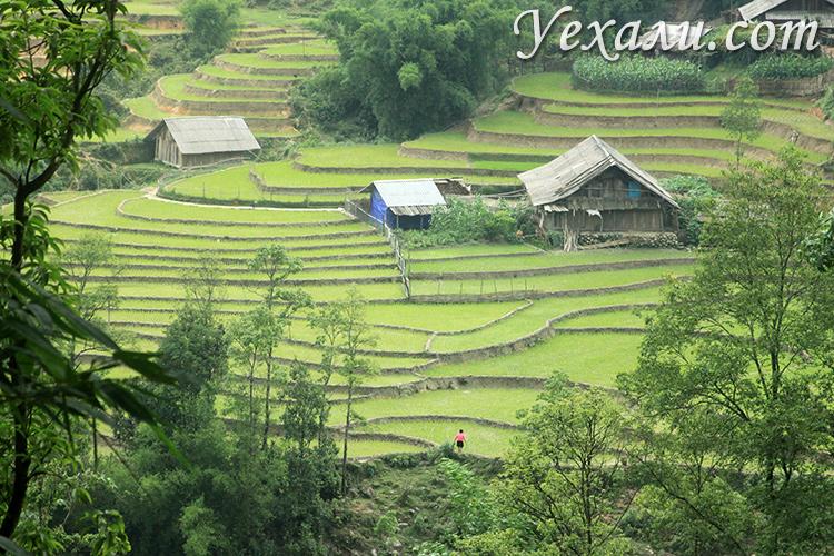 Рисовые поля во Вьетнаме, Сапа