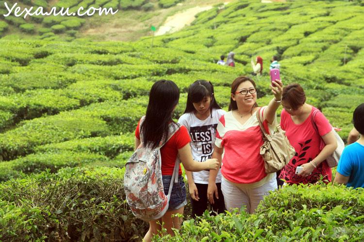Маршрут по Малайзии самостоятельно: Cameron Highlands