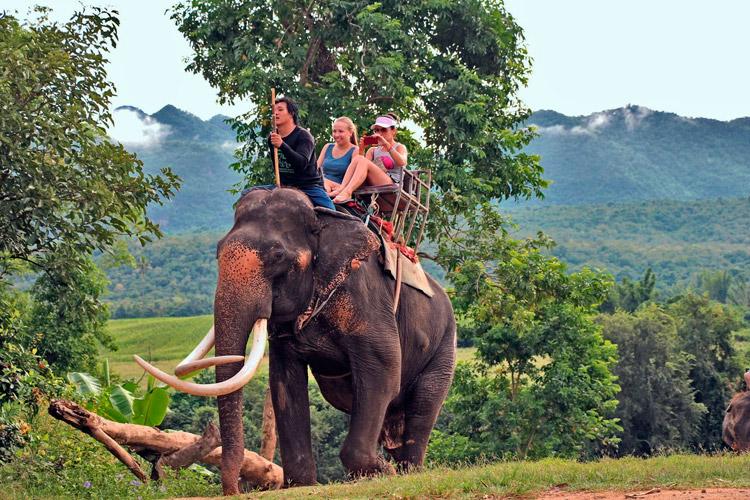 Катание на слоне в Таиланде