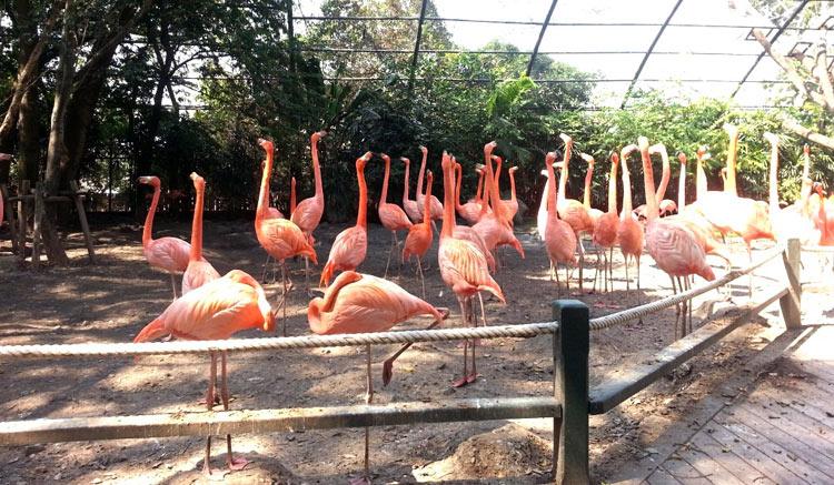 Сафари парк в Бангкоке: розовые фламинго