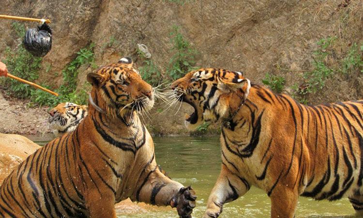 Тигриный монастырь в Таиланде