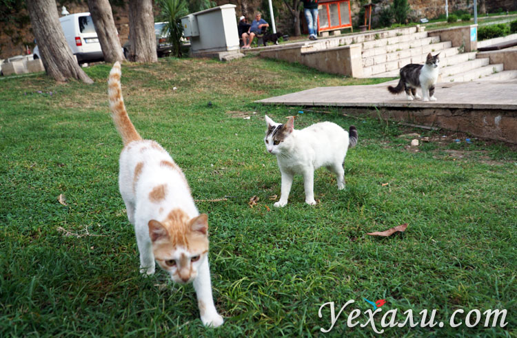 Интересные факты о Турции: знаменитые турецкие коты в Анталье