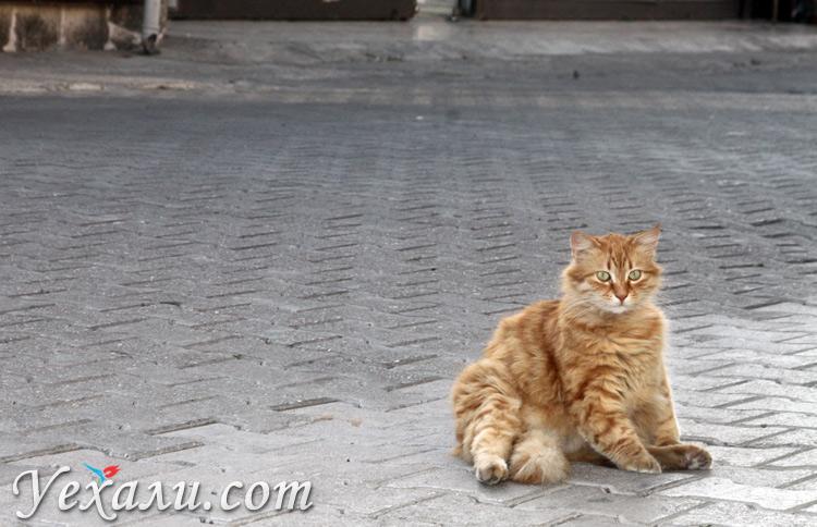 Коты в Сиде