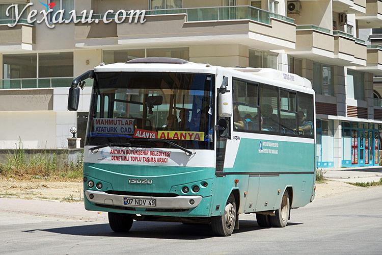 Общественный транспорт Алании, Турция: автобус в Махмутлар.