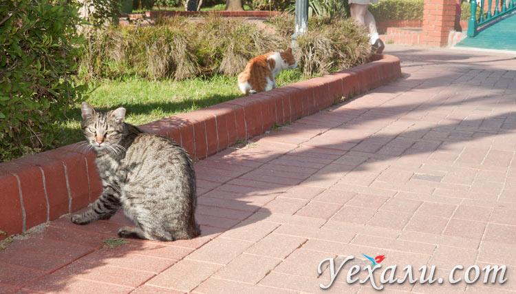 Фото Аланьи: турецкие кошки