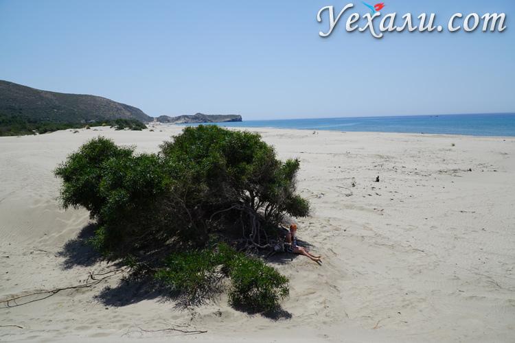 Деревья на пляже