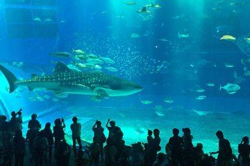 Цены на Окинаве, Япония: океанариум Тюрауми.