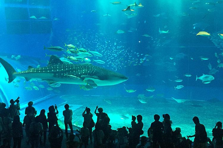 Достопримечательности острова Окинава: океанариум Тюрауми.