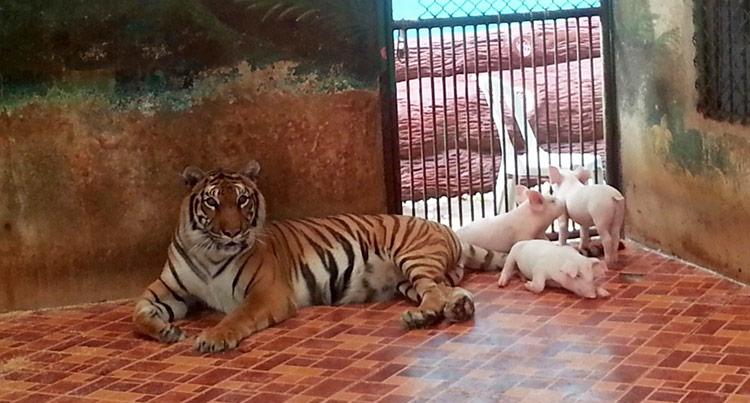 Экскурсия Дискавери в Паттайе: зоопарк Сирача