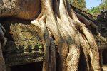Храм Та Прохм в Камбодже: казалось бы, при чем тут Анджелина Джоли?