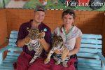Тигры в Паттайе: где и как можно пообщаться с ними? Много фото тигров и тигрят!