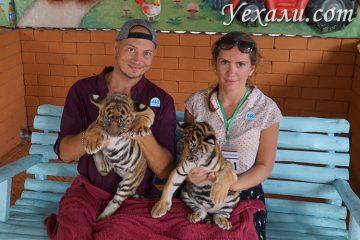 Экскурсия Дискавери в Паттайе, фото с тиграми