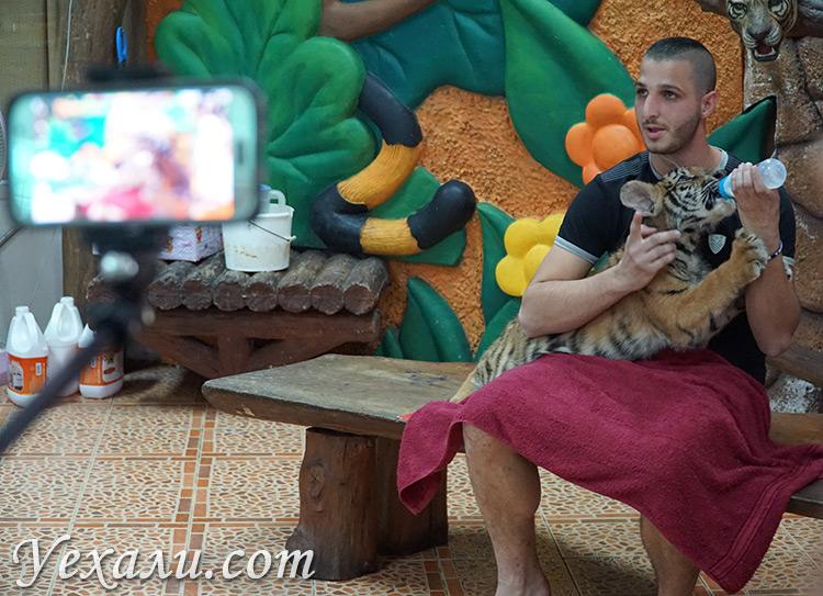 Кормление тигрят в зоопарке