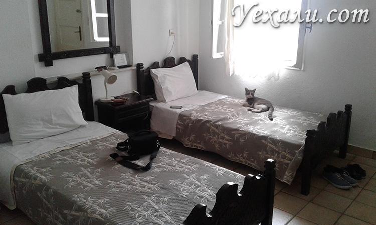 Кошка в отеле на Миконосе
