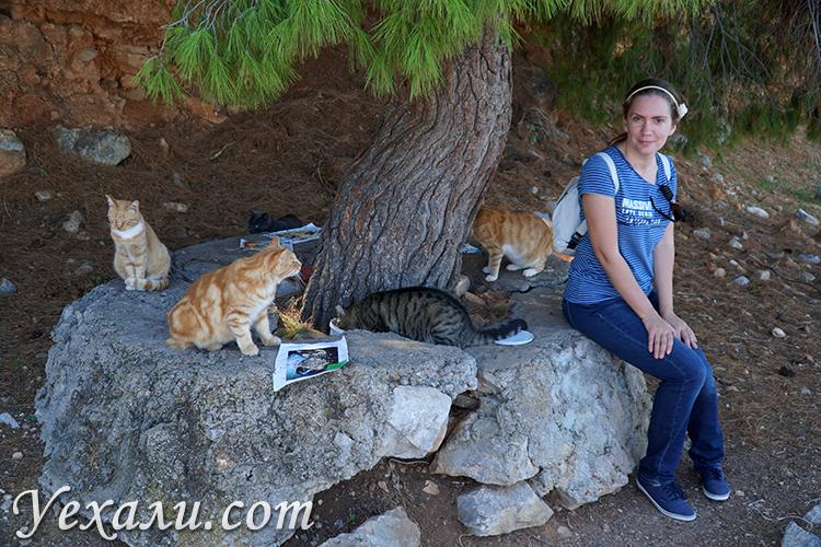 Остров Гидра в Греции - самый кошачий!