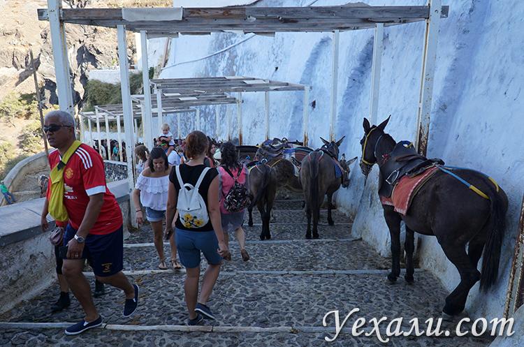 Ослики на Санторини по дороге в Старый порт