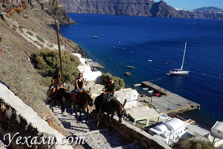 Чем заняться на Санторини: подъем из порта Ойи на осликах.