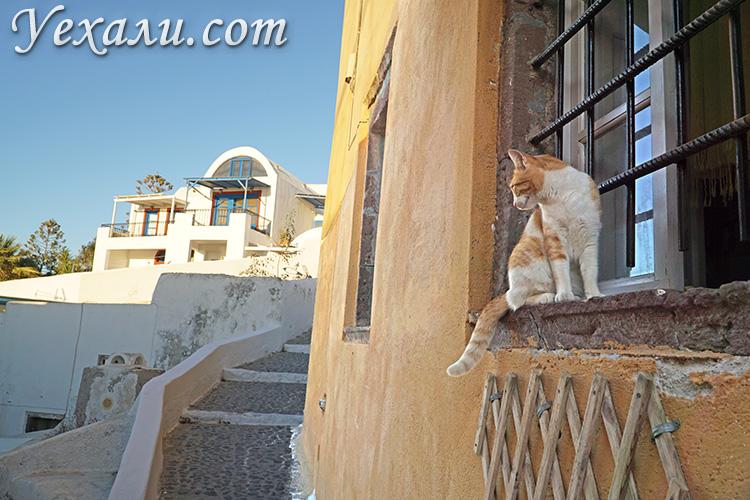 Лучшие фото Санторини (Греция): кот в деревушке Ойя.