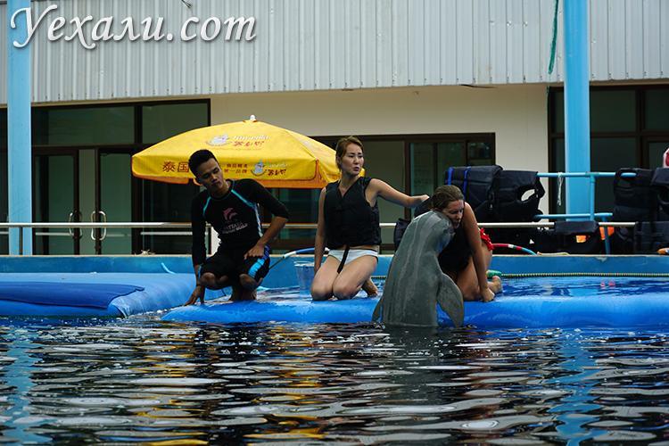 Плавание с дельфинами в Паттайе