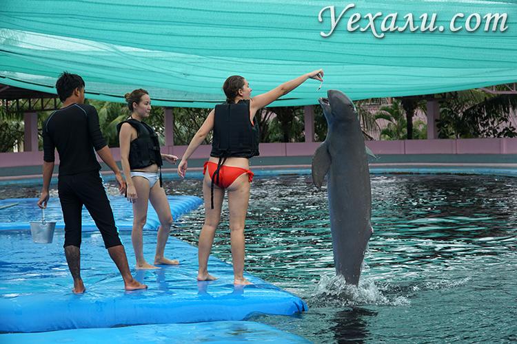 Экскурсия к дельфинам в Патайе