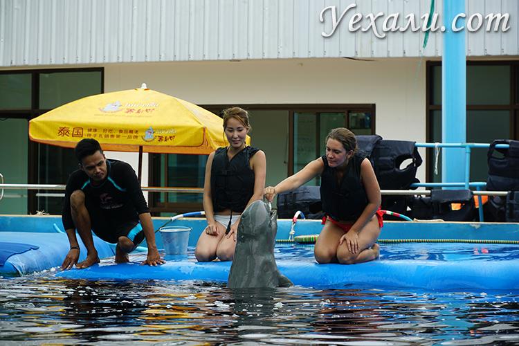 Плавание с дельфинами в Паттайе отзывы, фото и цена