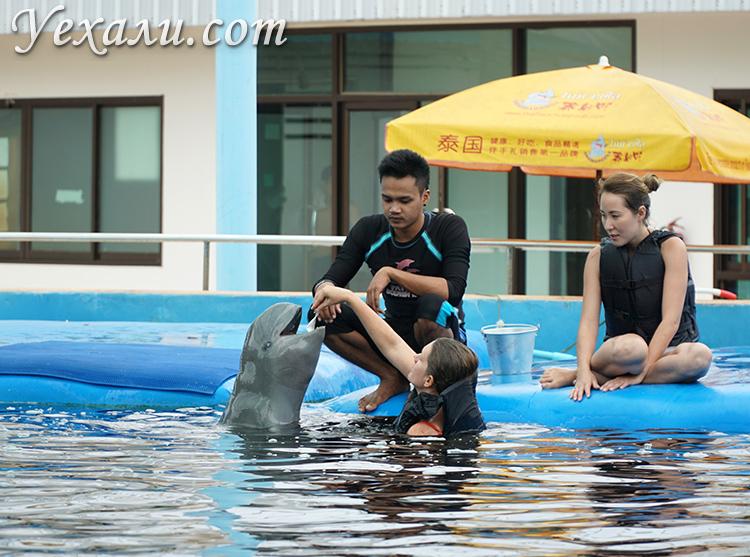 Отзывы на купание с дельфинами в Паттайе