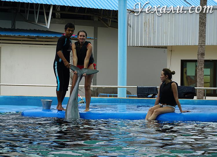 Экскурсия Плавание с дельфинами в Паттайе отзывы